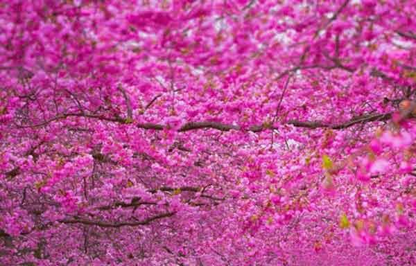 انشا یک روز بهاری را توصیف کنید