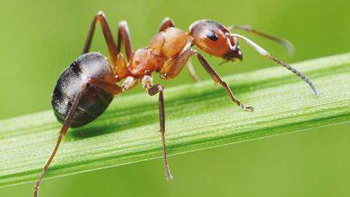 انشا در مورد مورچه ای بارکش