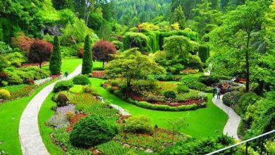 انشا درباره باغ خانه من