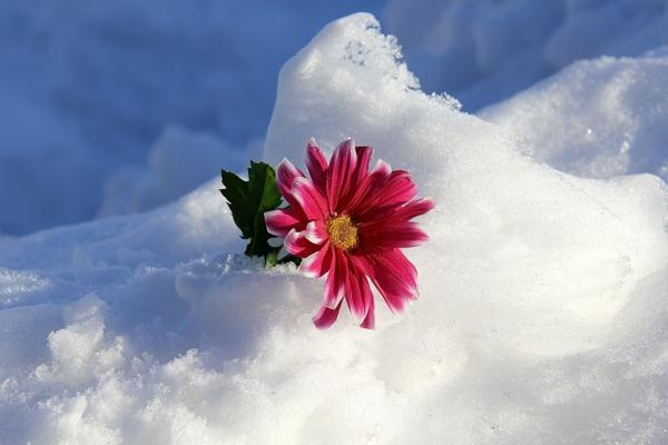 انشا در مورد شروع یک زمستان سرد