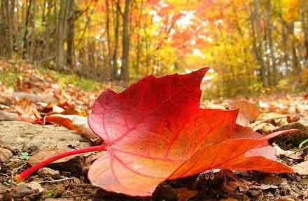 انشا در مورد فصل های زیبای سال