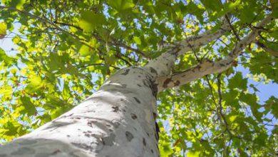 انشا در مورد درختان و اهمیت آن ها در زندگی ما